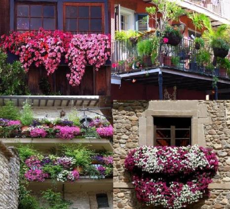 Balkon Süs Bitkileri, Çiçek Çeşitleri, Kaktüsler, Papatya
