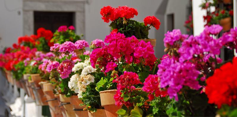 Balkonda Çiçek Bakımı