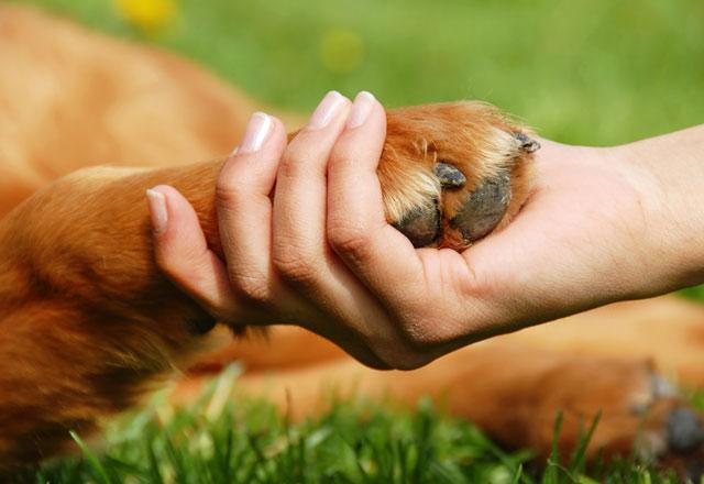 Evcil hayvan beslemek kalp hastalıkları riskini düşürüyor
