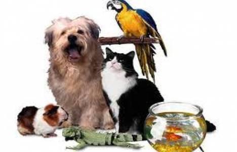 evde evcil hayvan beslemek yasa