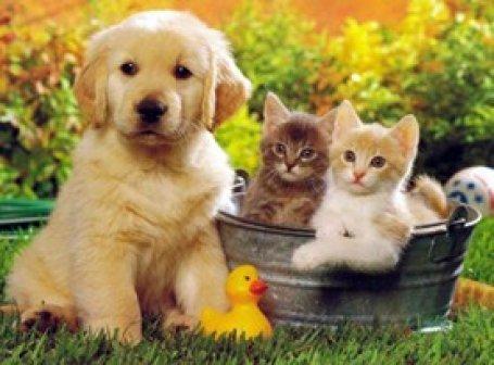 Evde evcil hayvan beslemenin zor yönleri nelerdir