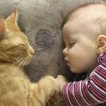 Hayvan Sevgisi Çocuğa Ne Katar? haberi