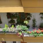 Keçiören'de En Güzel Balkon, Bahçe, Pencere Seçiliyor