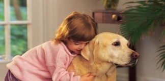 Kiralık evde köpek beslemek yasak mı? 26