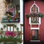 Salon çiçekleri kadar, balkon çiçekleri de hassas ve nazik
