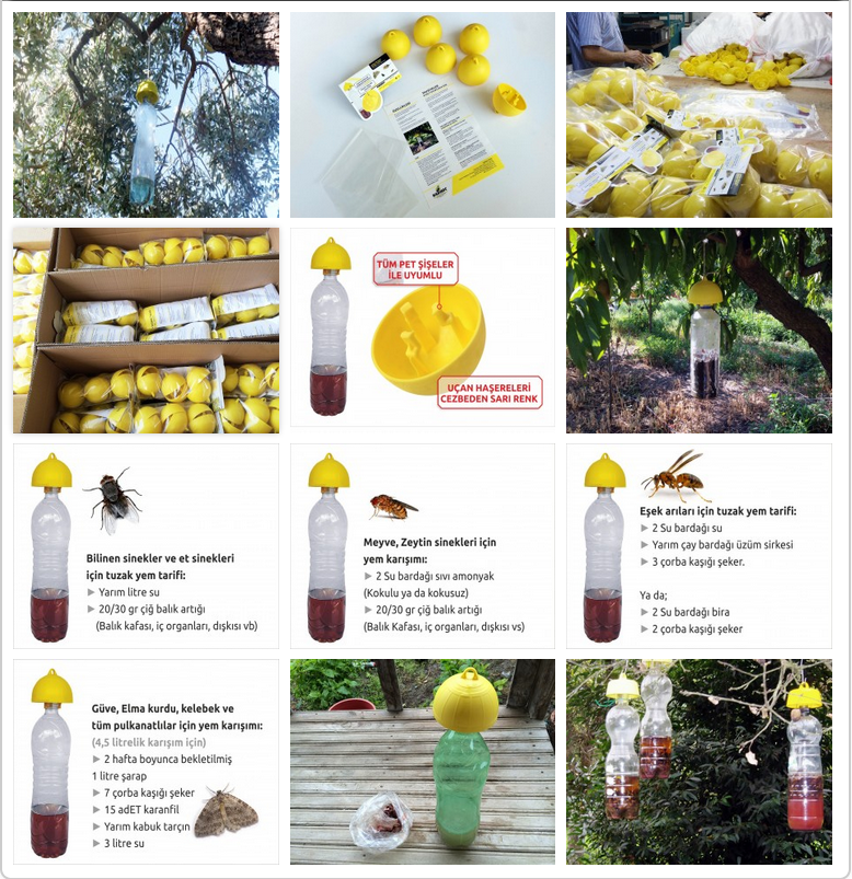 WEB KENTi: Sinek Kapanı (Mosquito Trap) Yapımı